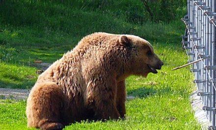 Bear Farm